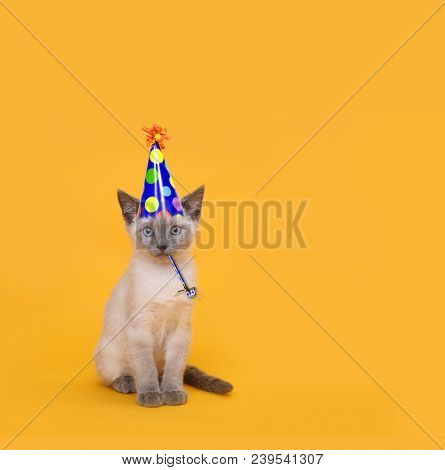 Siamese Party Cat Wearing Birthday Hat