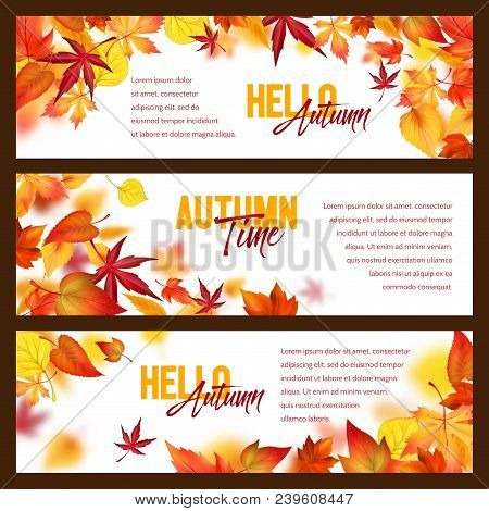 Hello Autumn Banners Of Falling Leaves And Fall Foliage. Vector Set Of Maple, Oak Or Poplar And Birc