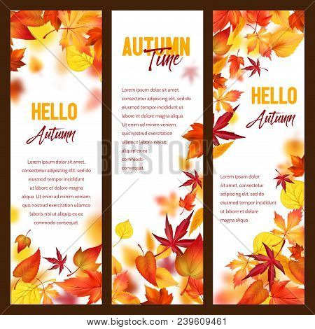 Hello Autumn Banners Of Maple, Oak Or Chestnut And Rowan Leaf Foliage Or Fall Falling Leaves. Vector