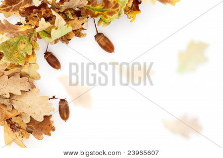 Oak Tree Autumn Background
