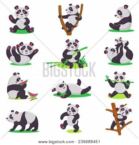 Panda Kid Vector Bearcat Character Or Chinese Bear Child Playing Or Eating Bamboo Illustration Set O