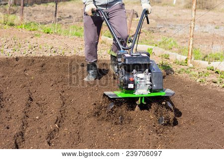 A Man Plowing The Land With A Motor-block, Preparing The Land For Planting Potatoes