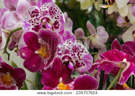 Close Up Of Wonderful Orchids On A Spring Day