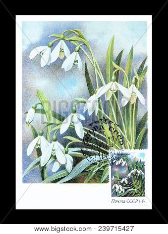 Soviet Union - Circa 1978 : Cancelled Postage Stamp Printed By Soviet Union, That Shows Snowdrops  F