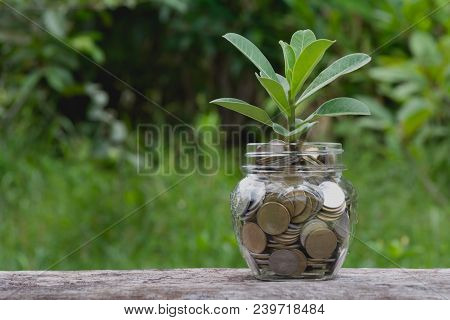 Saving Money Concept With Money Coin In Glass Jar For Financial And Accounting. Financial And Accoun