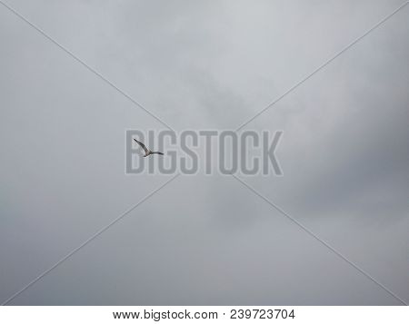 The Seagull Hovers Against The Background Of Clouds In The Gray Sky