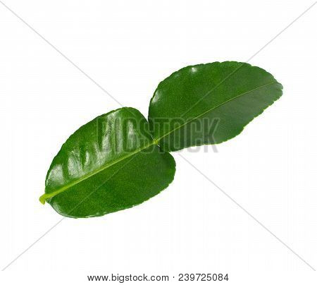 Bergamot Leaves On White Backgroundk Affir, Organic, Green, Fresh, Ingredient, Herb, Food