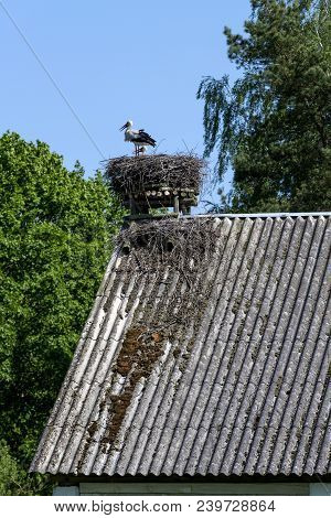White Stork In His Nest On The Toop Of The Building Roof, Podlasie, Poland