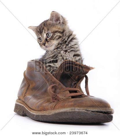 Cute kitten in old boot poster