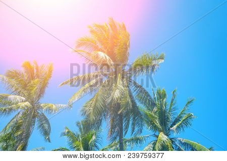 Paradise Landscape With Coco Palm Trees. Exotic Place View With Tropic Tree Silhouettes. Palm Tree F