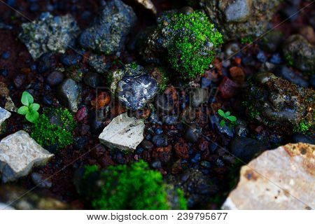 Top View Of Stone, Pebble, Moss, Grass, And Soil Soil After The Rain