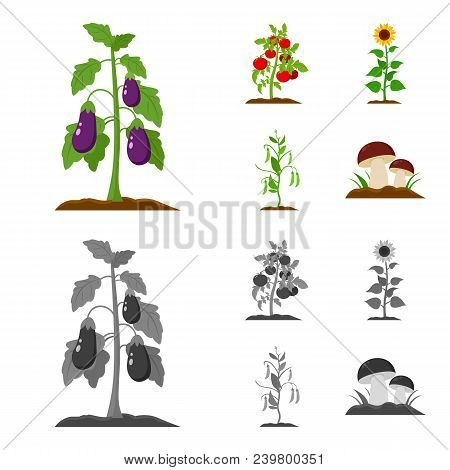 Eggplant, Tomato, Sunflower And Peas.plant Set Collection Icons In Cartoon, Monochrome Style Vector
