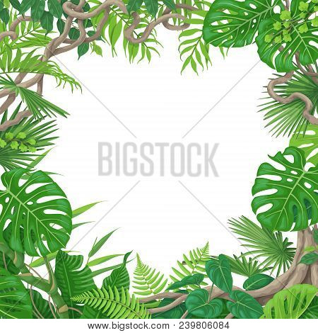 Summer Background With Green Leaves Of Tropical Plants And Liana Branches. Jungle Frame With Space F