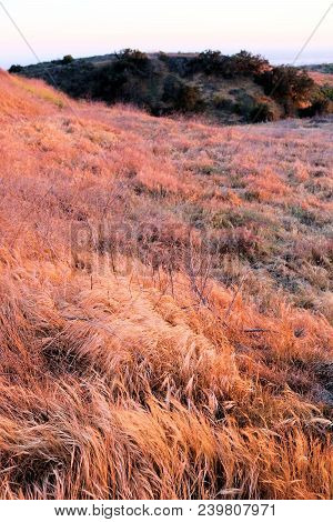 Rural Golden Grasslands On A Desolate Arid Landscape Taken During A Drought