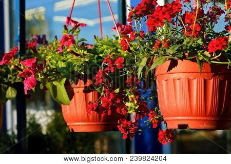 An Outside Baskets Filled With Vibrant Colorful Ornamental Flowers, Plants, In A Warm Summer Day Clo