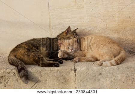 Two Cats, Brown And Yellow, Sleeping Near Each Together On Sunny Day. Valletta, Malta, Barraka Garde