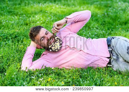Bearded Man With Daisy Flowers In Beard Lay On Meadow, Lean On Hand, Grass Background. Guy With Bouq