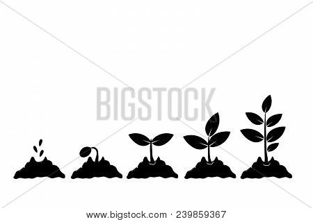 Planting Seed Sprout In Ground. Infographic Sequence Grow Sapling. Seedling Gardening Tree. Icon, Fl