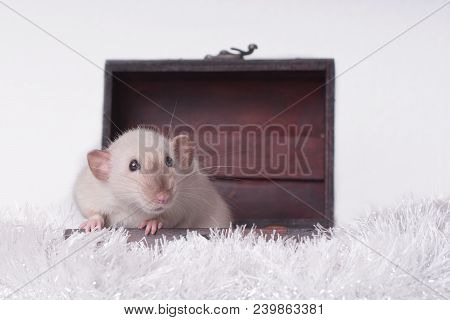 Cute Rodent Sit In A Open Suitcase And Looking Sideways.