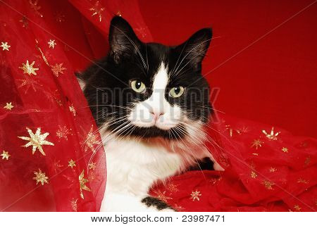 Tuxedo cat in holiday type material