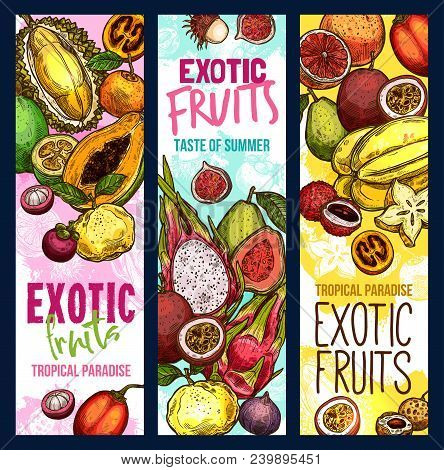 Exotic Fruits And Tropical Fruit Harvest Banners. Vector Sketch Design Of Fresh Mangosteen, Exotic J