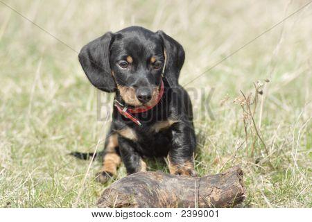 Little Cute Dog
