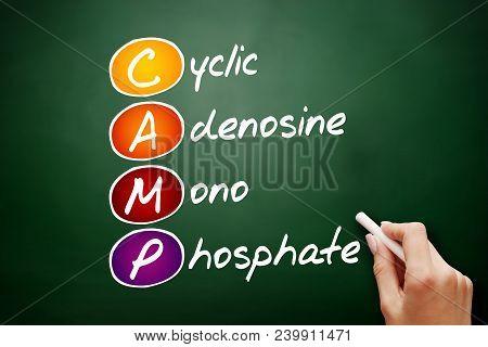 CAMP - Cyclic Adenosine MonoPhosphate acronym, concept on blackboard poster