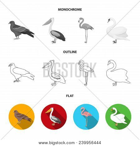 Crow, Ostrich, Chicken, Peacock. Birds Set Collection Icons In Flat, Outline, Monochrome Style Vecto