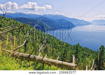 Russia, Siberia.view Of Lake Teletskoye From The Mountain Chichilgan. View Of The Right Bank Of The