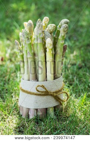 Bundle of white asparagus stands on the green grass. Nature background.