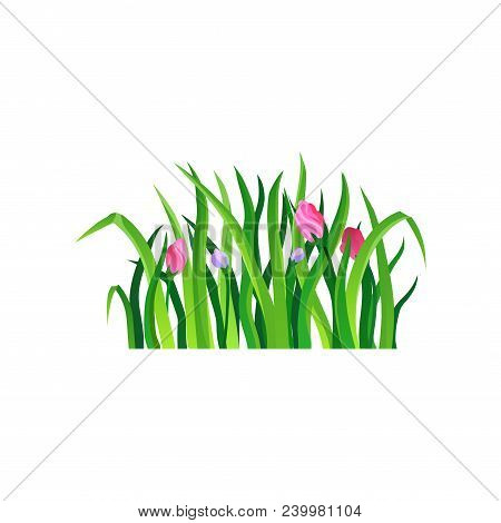 Long Green Grass With Blooming Spring Flowers. Nature And Gardening Theme. Decorative Herbal Border.