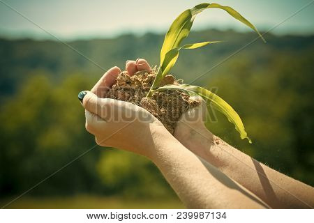 Agriculture, Growing Plants, Plant Seedling. Hand Hold Sprout In Ground, New Life. Protect Nature, N