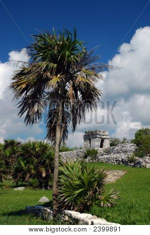 Ancient Mayan Landscape With Walls And Lookout Tower