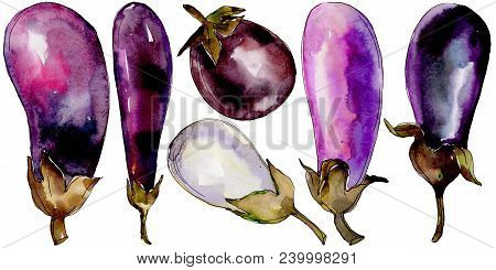 Eggplant Healthy Food In A Watercolor Style Isolated. Full Name Of The Vegetables: Eggplant. Aquarel