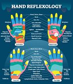 Hand reflexology massage therapy medical vector illustration chart. Human well being system. Inner organs and glands diagram. Acupuncture healing information scheme. poster