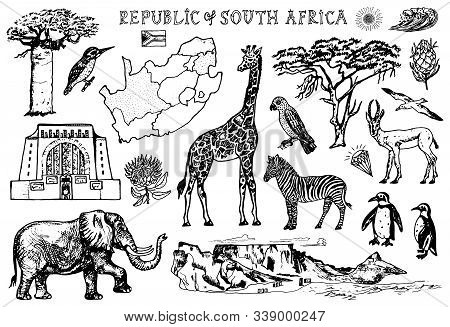 Africa Doodle Vintage Set. Wild Animals In Safari Isolated On White Background. Giraffe And Zebra, M