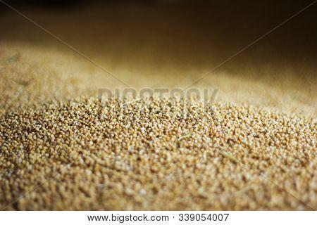 Fresh Sesame Seed On A Dark Background