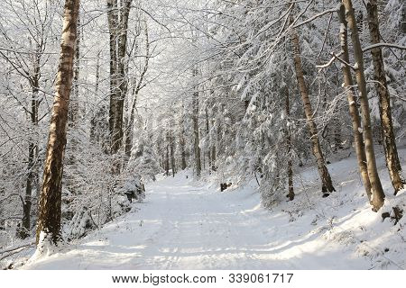 Forest path trail in winter scenery Nature background Nature landscape Nature background Natural environment Nature background snow frost trees sun Nature background frozen branch tree Nature background woods Nature background Road lane Nature background.