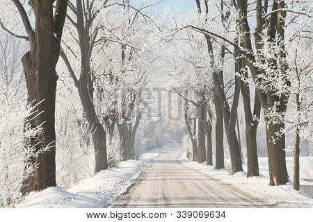 Winter Country road path trail Nature background Nature landscape Nature background cold snow morning frost trees sun Nature background frozen branch tree Nature background Rural road alley lane Nature background december hoarfrost Nature background.