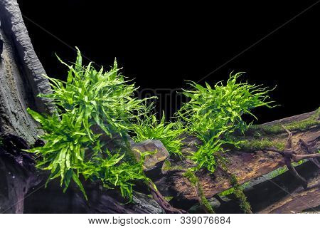 Submerged Freshwater Scenery Including Some Green Waterplants