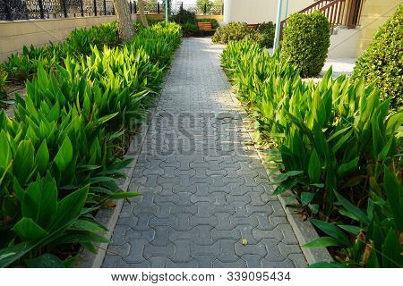 Scenic View Of Landscaped Path With Plants And Stones In Yard. Backyard Of Residential House. Stone