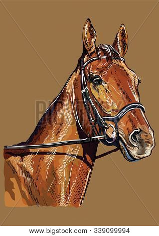 Colorful Horse Portrait With Bridle. Chestnut Horse Head Isolated On Brown Background. Vector Hand D