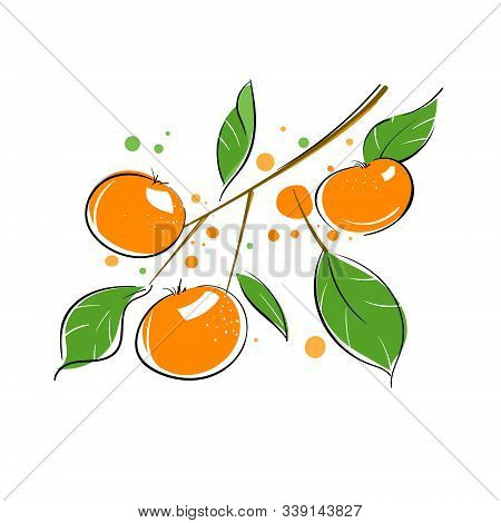 Tropical Fruit. Branch With Several Orange Fruits