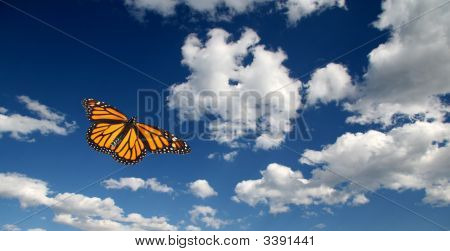 Lone Monarch Butterfly Taking To The Skies