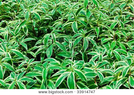 The Green And White Bush