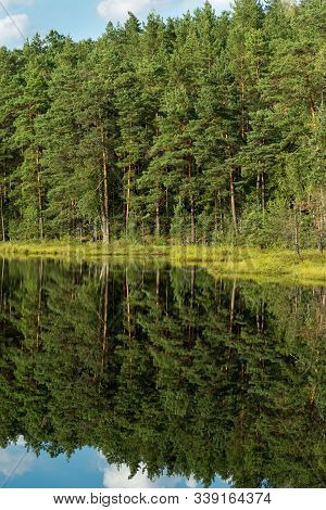 Forest Reflection In Calm Water Of Dystrophic Lake