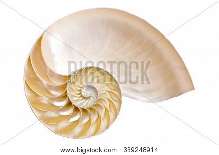 Half Ammonite On A White Background Illustrating The Fibonacci Sequence