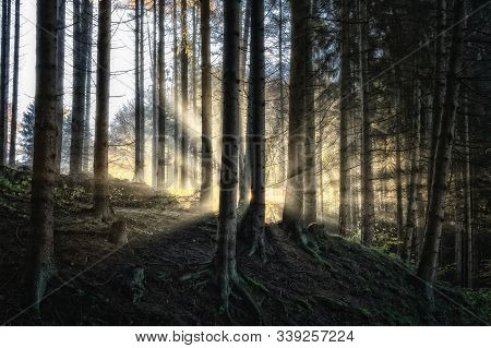The Mystical Mysterious Forest With Sunlight And A Light Mist.