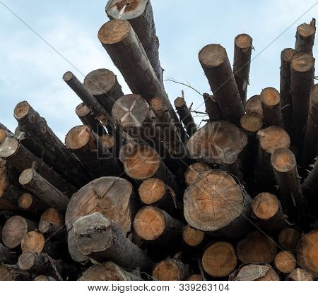 Pile of logs. Woodpile. Wood logs against the sky. Firewood. Sawmill. poster