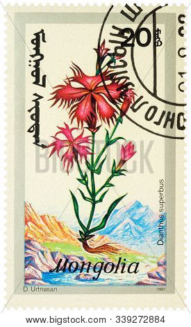 Moscow, Russia - December 13, 2019: Stamp Printed In Mongolia Shows Carnation (dianthus Superbus), S